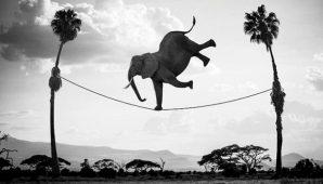 Aiuti e stabilità: equilibrio cercasi